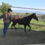 Prendere il cavallo a paddock