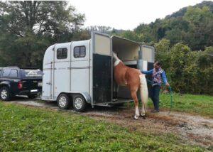 Foto 2 - L'addestratore può portare il cavallo del cliente fino al centro di addestramento? Sì, ma con delle accortezze.