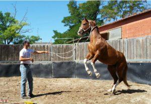 Foto 3 - Il rischio è insito nella pratica dell'addestramento. Un buon contratto può tutelare l'animale, l'addestratore e il proprietario.
