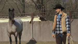Foto 1 - Un cavallo in attenzione ha occhi ed orecchie fissi sul cavaliere, seguendo ogni suo movimento e dimostrando la volontà di rimanere con lui.