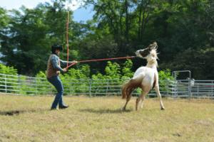 Foto 1 - L'istinto porta il cavallo a scegliere la soluzione della fuga come prima opzione. Mantenere il controllo in questa situazione non è sempre semplice.