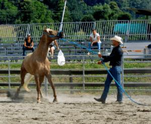 Foto 1 - In caso di paura, la prima scelta del cavallo è la fuga dal problema, ascoltando l'istinto di sopravvivenza sviluppatosi in milioni di anni.