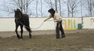 Foto 1 - Insegnare ad un cavallo a fermarsi nel lavoro da terra è uno step fondamentale per ottenere il controllo del movimento.
