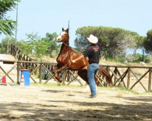Foto 1 - Un cavallo di fronte a un ostacolo inamovibile può reagire in maniera anche violenta, mettendo a repentaglio la sicurezza sua e del cavaliere.