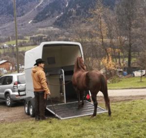 Foto 10 - La direzione della testa del cavallo è un chiaro indicatore di dove sta per muoversi. Sfruttiamola a nostro vantaggio.