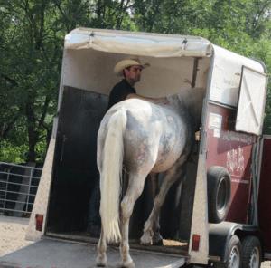Foto 11 - Il sistema di caricamento con il cavallo a fianco ci permette di mantenere il controllo della situazione e di rimanere in sicurezza.