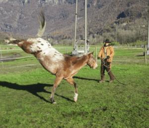 Foto 2 - Quando la possibilità di fuga da un problema è negata, il cavallo sceglie di combattere contro la fonte della paura.