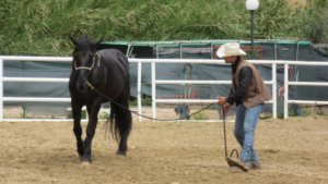 Foto 2 - Il primo livello di pressione per ottenere una corretta fermata è un passo deciso verso la spalla interna del cavallo, usando la nostra gamba che ci permette di rimanere frontali rispetto al cavallo.