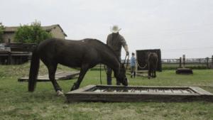 Foto 2 - La paura si manifesta nella gestualità del cavallo. Impariamo a leggerla e a non confonderla con il rifiuto ad affrontare un problema.