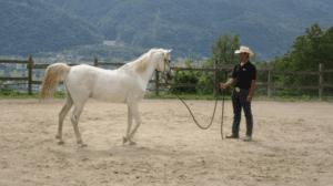 Foto 3 - Il passo successivo si ottiene nel momento in cui tutto l'atteggiamento del cavallo si orienta verso il cavaliere, dandogli la totale attenzione.