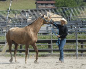 Foto 3 - L'esercizio di base consiste nel far roteare la lunghina sul fianco del cavallo, stimolando le reazioni con l'intento di far capire al cavallo che a nulla serve la fuga.