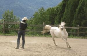 Foto 3 - Se dopo la richiesta e la voce il cavallo non si ferma, nel lavoro con la lunghina possiamo dare dei piccoli colpetti alla capezza per ottenere una situazione di disturbo che porti il cavallo a volersi fermare.