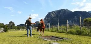 Foto 3 - Posizioniamoci vicino all'ostacolo e con il primo step, chiediamo al cavallo di affrontarlo. Il nostro sguardo anticipa il percorso del cavallo.