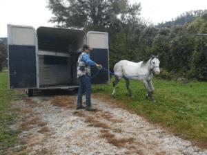 Foto 3 - Cambiare gli schemi dei cavalli permetterà loro di affrontare un vecchio problema in una nuova ottica. Lavoriamo vicino al trailer senza pensare inizialmente a caricarlo.