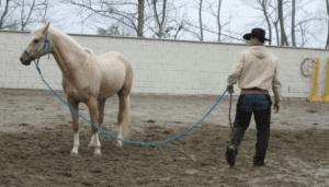 Foto 4 - L'atteggiamento di questo cavallo indica una parziale attenzione (orecchio interno sul cavaliere), ma una chiusura caratteriale. Un atteggiamento da comprendere e da gestire di conseguenza.