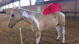 Foto 4 - Desensibilizzazione, abituazione e razionalizzazione sono tre diversi modi di approcciare la parte istintiva del cavallo verso le sue paure.