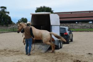 Foto 5 - Il trailer è una tipica situazione dove il lavoro sulle paure del cavallo è fondamentale. In questo caso un lavoro sulla parte razionale del cervello permette di evitare situazioni pericolose per il cavallo ed il cavaliere.