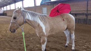 Foto 5 - Un cavallo immobile non è detto che sia rilassato. L'assenza di segnali di relax ci indica che è ancora in tensione e pronto ad una reazione.