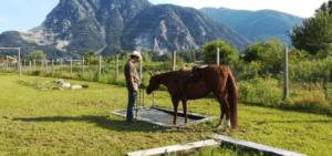 Foto 6 - Con la razionalizzazione si chiede al cavallo di anticipare il pensiero razionale a quello istintivo. In questo modo è portato a cercare soluzioni anche a problemi a lui sconosciuti.