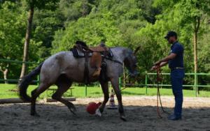 Foto 7 - Usiamo la fantasia per creare situazioni sempre nuove che costringano il cavallo a riflettere sulle situazioni che proponiamo.