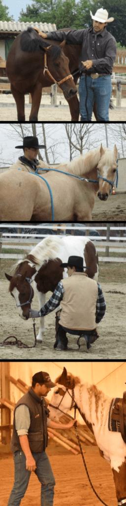 Foto 7 - I diversi esercizi del quarto step insegnano al cavallo a rispettare le pressioni della capezza: (dall'alto) lateralmente, in maniera inversa, verso il basso e indietro.