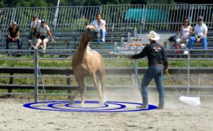 Foto 8 - Quando un oggetto fa molta paura, valutiamo delle aree di avvicinamento e facciamo in modo di farle accettare al cavallo una ad una, senza aver fretta di passare alla successiva.
