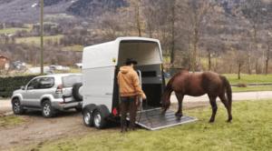 Foto 8 - Mentre il cavallo analizza il mezzo, non applichiamo nessuna pressione. Diamogli il tempo di cui lui necessita, per trovare la sicurezza.