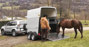 Foto 9 - Il trailer è un classico momento in cui valutare se il cavallo ha realmente paura o rifiuta di entrare per mancanza di volontà.