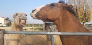 cavallo che morde