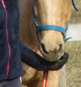 dare cibo con le mani ai cavalli