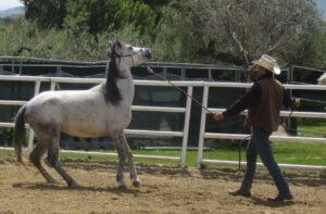 correzione cavallo che morde